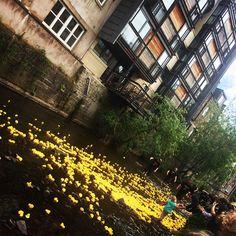 The Stockbridge Duck Race. #duckrace #stockbridgeduckrace #stockbridgeduckrace2015 #stockbridge #edinburgh #stockbridgeedinburgh #scotland