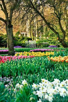 Travel Inspiration for The Netherlands - Keukenhof Spring Tulip Gardens, Lisse, The Netherlands