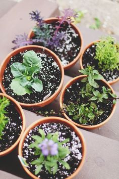 Grow Where You're Planted: Tips For Small Space Gardening