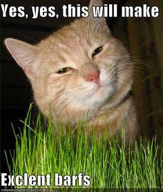 you gotta love kitties <3