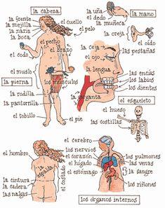 lengua en el cuerpo humano: