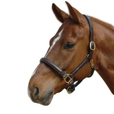 Gorgeous wardrobe addition for the best dressed horses! Albion Leather Headcollar