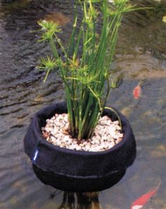 Pond on pinterest ponds water lilies and garden bridge for Plastic floating pond plants