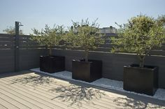 Olive trees, decking, planters, simplicity, stunning                                                                                                                                                      Más