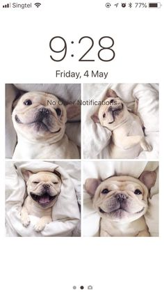 This wallpaper makes me so happy. #cute #dogs #dog #aww #puppy #adorable