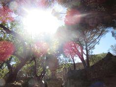 sun | ruins | trees | summer