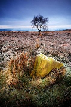 Tree and rock on the top of Rowsley Bar