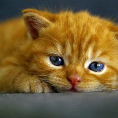 Little Garfield~~~