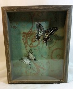 Check out this item in my Etsy shop https://www.etsy.com/listing/212628551/real-butterfly-specimens-in-vintage