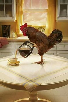 You know the rooster NEEDS that coffee to make it up in time to wake ME up. I indulge him because I know hard HARD 'tis to wake up of a morning. He is a really special rooster and he is pouring My coffee:)
