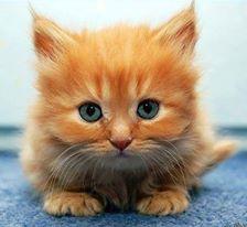 Um filhotinho super fofinho de gato dos olhos azuis claros com a paisagem azul, que combina com seus olhos. Owwwwnt super fofo né? *u* Imagem perfeita para fãs e defensores de gatos.