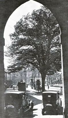 Large linden in the Arenal, Bilbao. Bilbao, Basque Country, France, City, Outdoor, Image, Antique Photos, Palaces, Cities