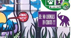 Stop all' attendamento del Circo  con Animali di Moira  Orfei  a Firenze