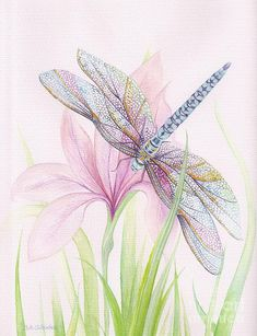 Dragonfly Painting - Sheer Wings / Sold by Barbara Anna Cichocka Dragonfly Painting, Dragonfly Art, Art Papillon, Art Watercolor, Butterfly Watercolor, Watercolor Dragonfly Tattoo, Selling Art, Art Plastique, Painting & Drawing