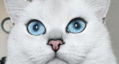 Le chat Coby, une vraie star du web. - Instagram @cobythecat