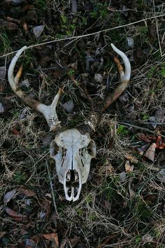 Deer island skull and bones Animal Skeletons, Animal Skulls, Half Elf, Crane, Animal Bones, Southern Gothic, Deer Skulls, Vulture, Skull And Bones