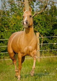 813 Best Great Horses 111 Images Pretty Horses