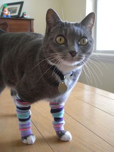 Leggings for Kitties. She made these as a joke, but maybe it would help arthritic back legs. She explains how to make them on her blog.