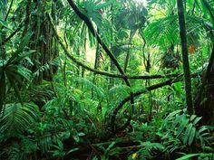 Reunidos em Rio Branco em evento realizado pela organização latino-americana Redparques (cuja secretaria técnica é exercida pela FAO), representantes do Parque Nacional Alto Purús e da Reserva Comunal Purús (Peru), do Parque Estadual Chandless e da REX Cazumbá-Iracema (Brasil) e da Reserva Manuripi (Bolívia) concordaram em desenvolver ações conjuntas para garantir a preservação da região amazônica e sua biodiversidade.