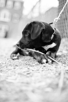 Black Puppy Animal Welfare League, Animal League, School Photographer, Pet Photographer, Cow Pictures, Animal Pictures, Black Puppy, Dog Love, Animals And Pets