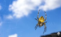Spider In a Web City Art, Ontario, Spider, London, Photography, Animals, Spiders, Photograph, Animales