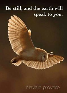 The great Owl. Native American Spirituality, Native American Wisdom, American Indians, Native American Proverb, American Animals, Wisdom Quotes, Qoutes, Life Quotes, American Proverbs