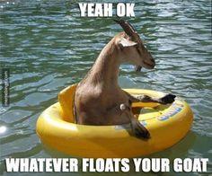 Get this goat a margarita