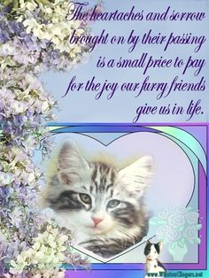 """My beloved 5 year old kitty passed away this morning. She was me and my husbands first pet together. We are distraught and confused. She was our """"baby"""". Pet Loss Quotes, Baby Animals, Cute Animals, Joy And Sadness, Card Sentiments, Eternal Love, Rainbow Bridge, Pet Memorials, Family Dogs"""