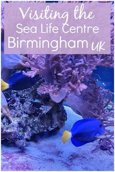 My Birmingham Sealife Centre review - visiting the aquarium in Birmingham, UK, home to seals and penguins as well as fish galore, plenty of interactive games and the UK's biggest 360 degree transparent ocean tunnel. Tips on visiting the Birmingham Sealife Centre, highlights of what there is to see, and why you should book in advance #birminghamuk #birminghamwithkids #mummytravels Sea Life Centre Birmingham, Birmingham Uk, Family Days Out Uk, Days Out With Kids, Travel With Kids, Family Travel, Gaming Center, Destinations, Underwater World