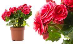 20 plantas para ambientes fechados > Conheça as plantas ideais para serem criadas dentro de casa ou de um escritório e aprenda como cuidar delas