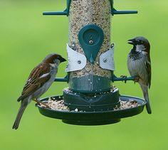 best bird feeders for small birds