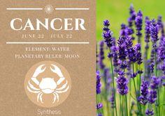 Essential Oils for your Astrological Sign — Cancer, June 22 - July 22