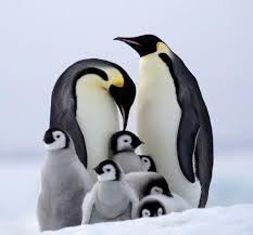 Penguin Animals, Penguin Love, Arctic Animals, Arctic Fox, Baby Animals, Cute Animals, Wild Animals, Baby Penguins, Snowy Owl
