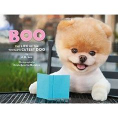 """Boo is a real dog!  He only looks like an adorable plush toy.  """"Boo: The Life of the World's Cutest Dog"""" by J. H. Lee."""