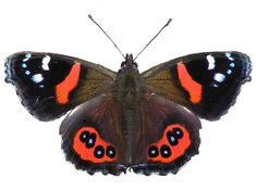 March 14 is Learn About Butterflies Day!