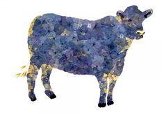 Forget-me-not Cow (Amanda McCauley)