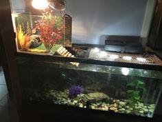 DIY turtle basking area. Turtle Tank Setup, Turtle Dock, Turtle Tanks, Turtle Care, Pet Turtle, Turtle Aquarium, Aquarium Fish, Turtle Basking Area, Turtle Terrarium