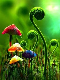 MUSHROOMS AND FERNS - Pixdaus
