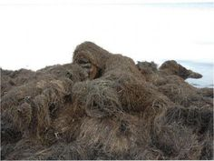 Have you ever tried to find a sniper in a haystack?