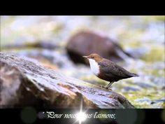 Celui Qui Met En Jésus - Sebastian Demrey & Jimmy Lahaie (Heritage) - YouTube Jimmy, Grace, Animals, Youtube, Psalm 30, Christian Songs, Love, Places, Animales