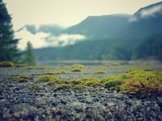 A closeup of the landscape at the Cleveland dam in North Vancouver. North Vancouver, West Coast, Cleveland, Close Up, Landscape, Nature, Travel, Naturaleza, Viajes