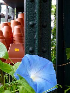Paris Markets, Plants, Planters, Plant, Planting, Planets
