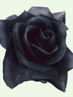 Black rose tattoo idea