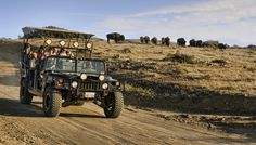 Our open-air Extreme Hummer Tour travels five miles up the rugged Catalina Island interior terrain. You'll love this exciting tour. Hours, rates and more.