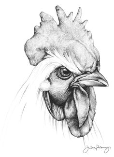 See by Chloé Kvinna Sandaletter nero Hållbara produkter Pencil Drawings Of Animals, Animal Sketches, Bird Drawings, Art Drawings Sketches, Cool Drawings, Art Sketches, Chicken Drawing, Chicken Art, Rooster Illustration