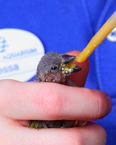 National Aquarium - Gouldian Finch