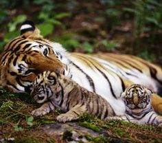 Luxury Holidays - Golden Triangle and Bengal Tigers