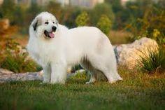 www.petclic.es la mayor tienda online de productos para #mascotas. La mayor biblioteca de contenido y consejos sobre mascotas. 1.000 consejos. 50.000 imagenes. Foto del #perro montaña pirineos