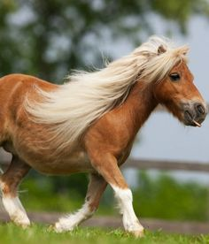 I'm sort of obsessed with miniature horses at the moment... I think a mini horse should be our next pet... <3 (when we move of course) ;)