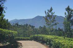 #valentin #pigeau #MMI #limoges #design #photographie #Sri #Lanka #picture #montagne #moutain